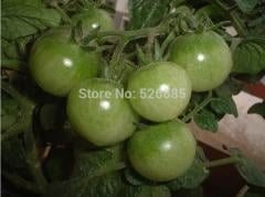 Free shipping Green Agate tomatoes, green