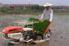Walking transplanter
