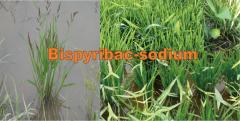 Herbicide: Bispyribac-sodium