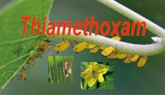 Insecticide: Thiamethoxam