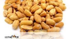 Roasted & salted peanuts (AF-RSP)