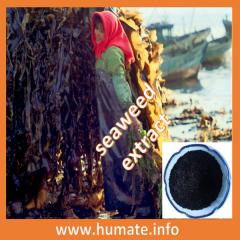 100% de extracto de algas marinas solubilidad, fertilizante de algas