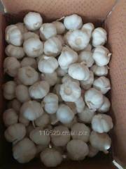 中国纯白大蒜