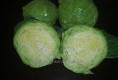 扁包,圆白菜