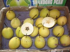 Shandong pear