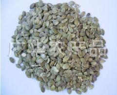Ядра семян тыквы