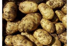 2016 Fresh potato/Cheap potato/High quality potato