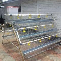 High quality cheap poultry farm best sale chicken