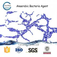 Anaerobic bacteria agent