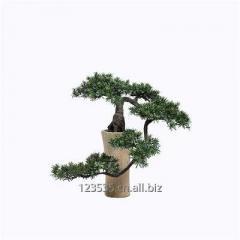 Artificial Podocarpus Plant