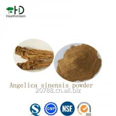 Chinese Angelica sinensis powder