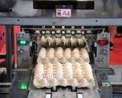 Egg Processing Machine From China