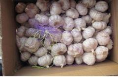 Normal white garlic 3