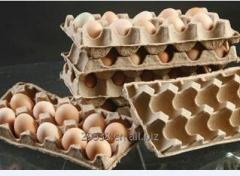 Egg Packing Production Line