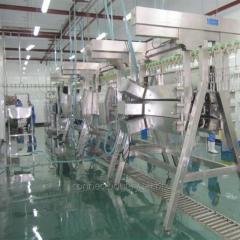 S.S 304 type Chicken processing line for