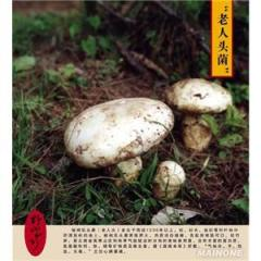 قارچ کوپرینوس یا مرد پشمالو
