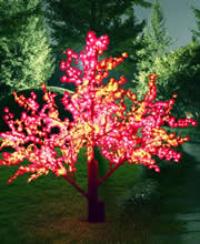 Trees illuminating