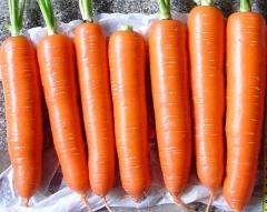 胡萝卜种子