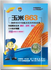 玉米863