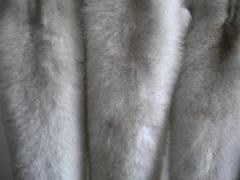 Badger ferrety (furskins)