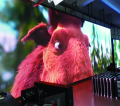 P4.81 outdoor LED display, die-cast aluminum box 500*500mm, high refresh rate 1920Hz