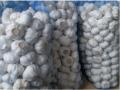 Chinese White Garlic in Mesh Bag