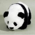 Standing Panda