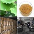 Herbal Extract Lotus Leaf Extract Nuciferine
