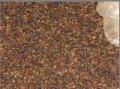 Dry Ant for Egg