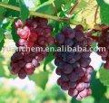 Виноградные семена ПЭ КАС №: 84929-27-1