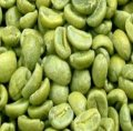 Green coffee bean(Chlorogenic Acid)
