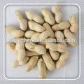 Chinese Peanut in Shell for Best price