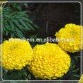 Marigold oleoresin lutein cas: 127-40-2