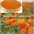 Natural lutein powder/Xanthophyll powder , Xanthophyll 2%,4%