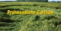 PGR: Prohexadione Calcium