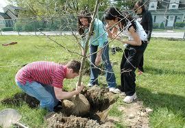 预定 Tree planting services