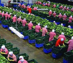 预定 Vegetable processing