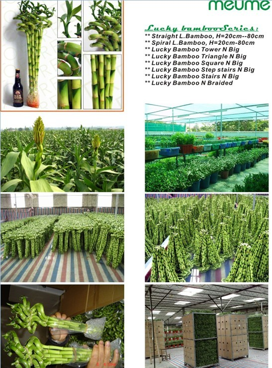 Order Landscaping gardening area