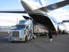 International Airfreight